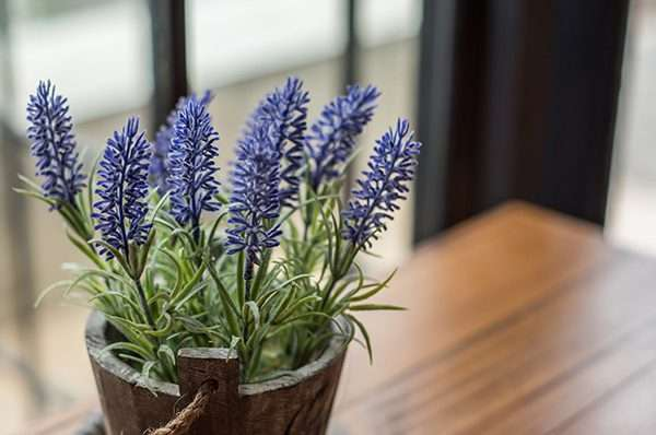 10 Plants Poisonous to Cats and Dogs
