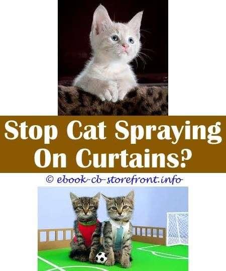 10 ridiculous ideas ssscat cat spray do cats spray after