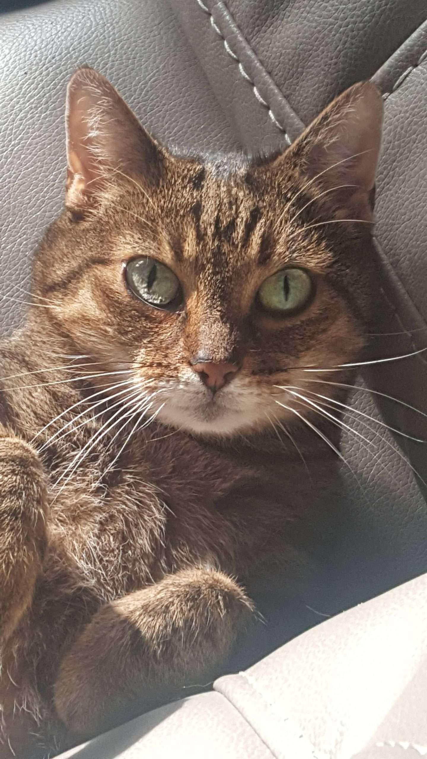 12 years old kitten