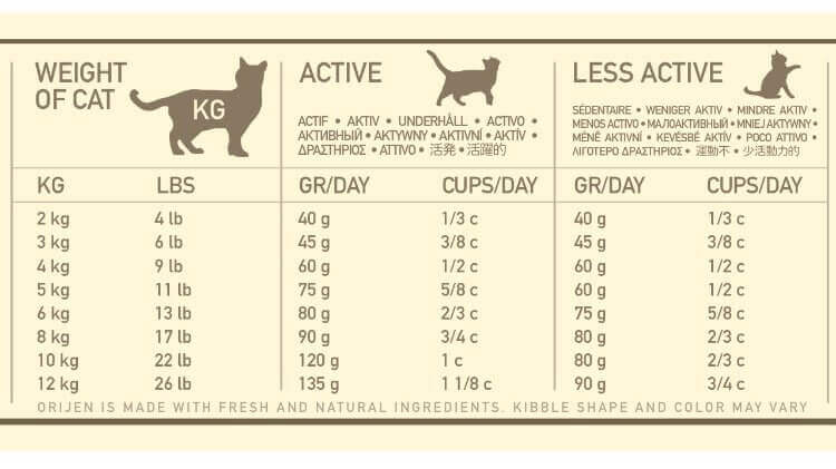 13 Facts On How Much Wet And Dry Food To Feed A Cat
