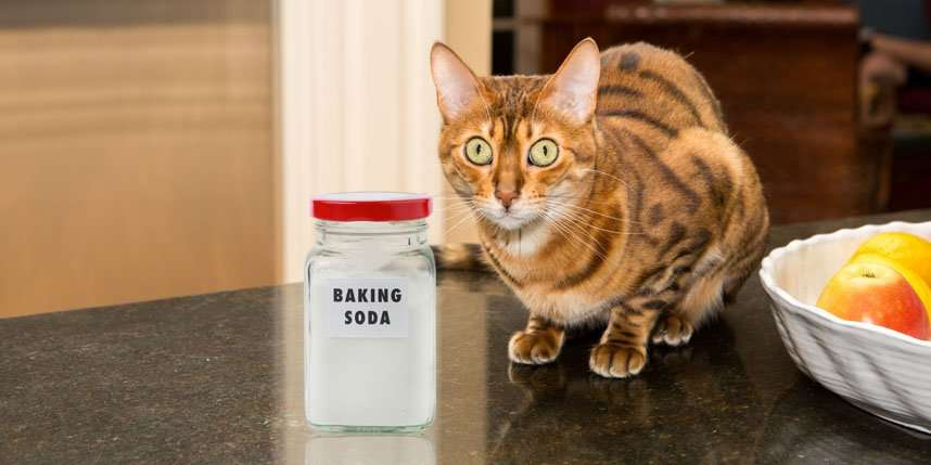 3 Reasons Not to Use Baking Soda in Cat Litter