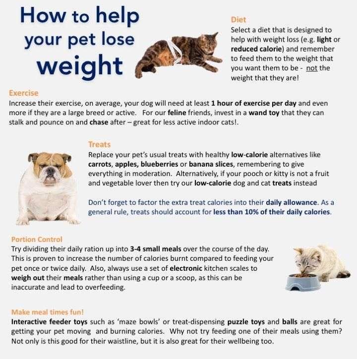 47 Best Photos Indoor Cat Calories Per Day / How Many ...