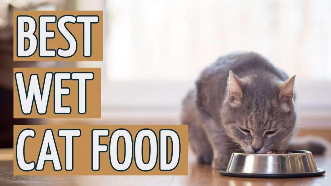ai best wet cat food top 10 wet cat foods of 2018 ai