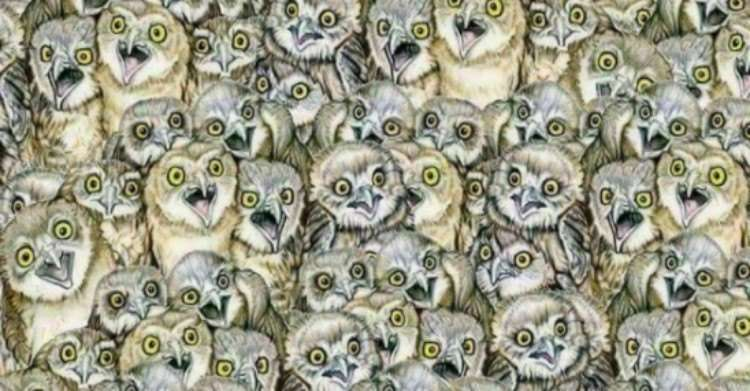 can you find the cat thats hiding among these owls