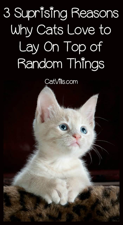 cat behavior why do kitties like to lay on random things