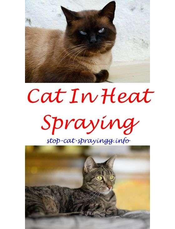 Cat Spraying Remover Products