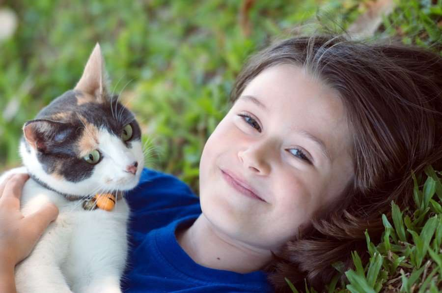 do cats really have nine lives wonderopolis