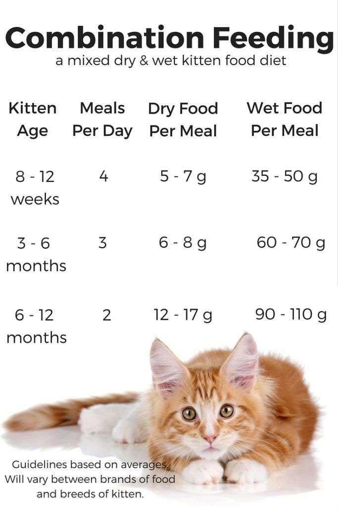 Feeding Your Kitten