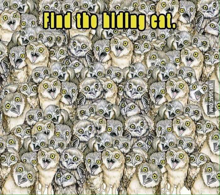Find the hiding cat.