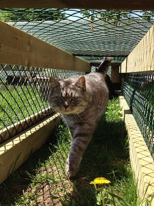 Guest Post: Building Your Cats Dream Catio  Lincoln ...