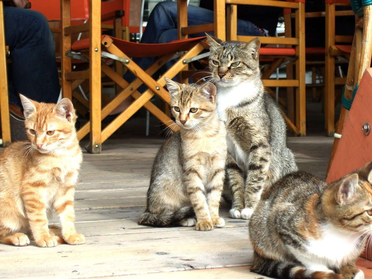 Have you noticed that cats in Italy seem to be everywhere?