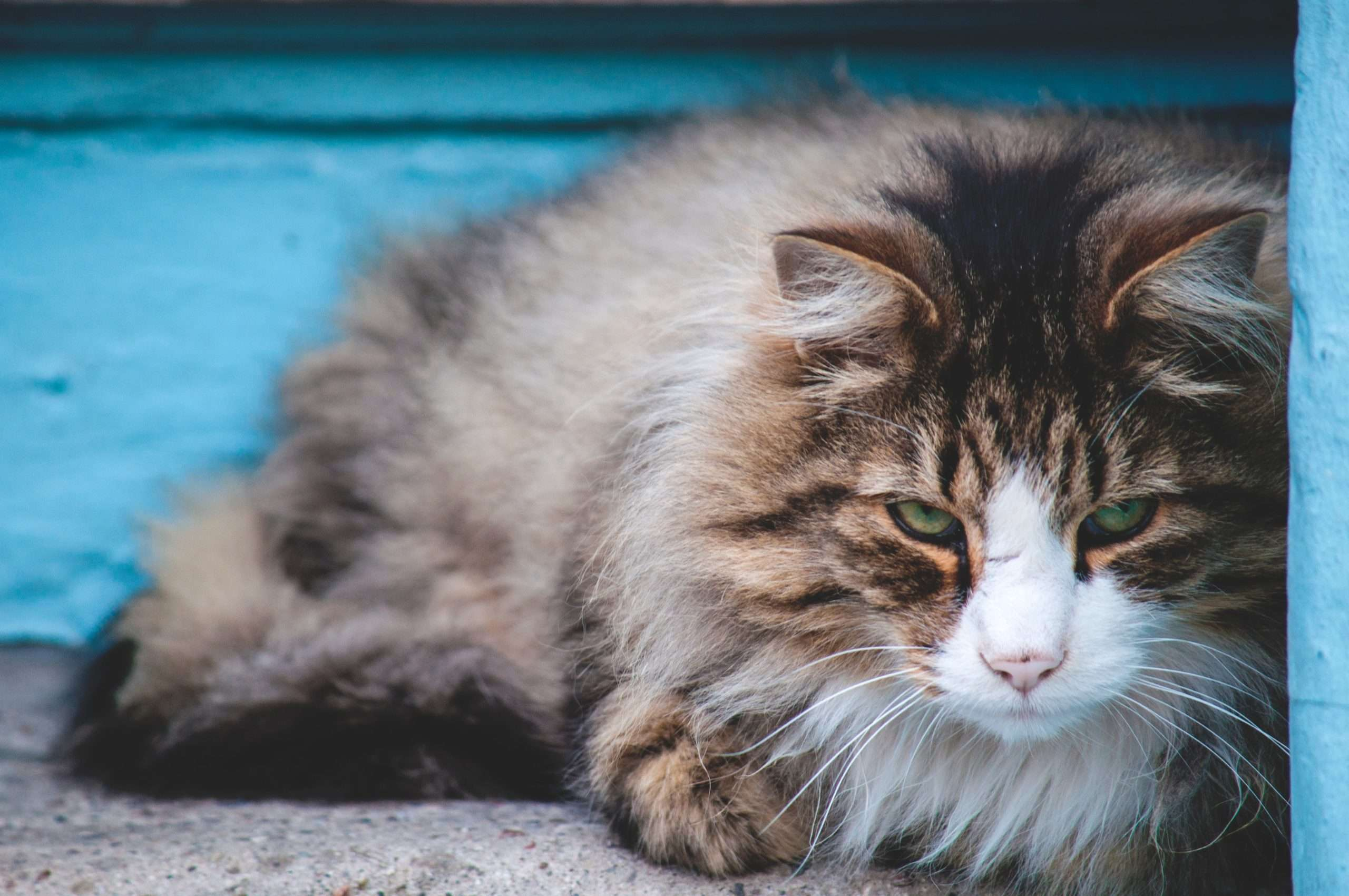 How do I deal with a senior cat with matted fur?