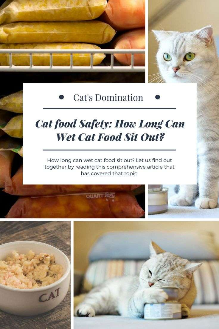 How long can wet cat food sit out? Let us find out ...
