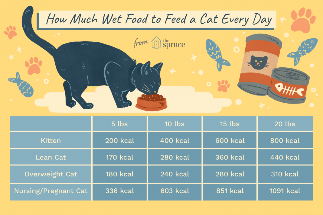 how many cans of cat food to feed a cat catwalls