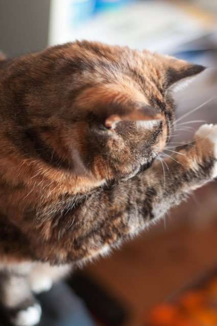 How Much Does It Cost To Declaw A Cat In Ontario