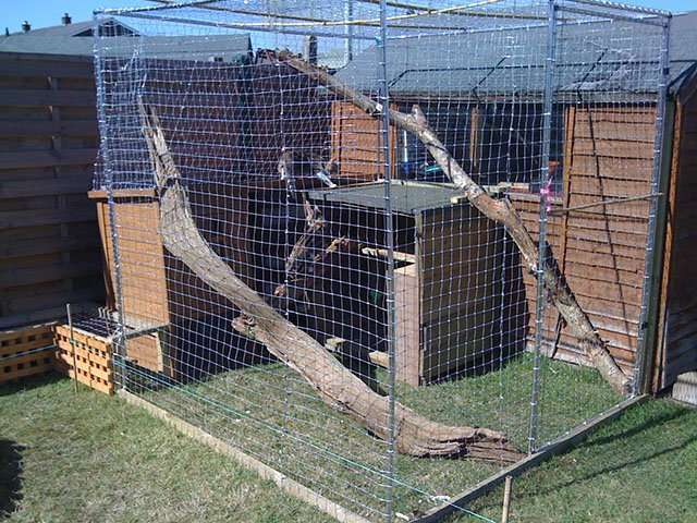 How To Build An Outdoor Cat Run To Keep Your Cat Safe ...