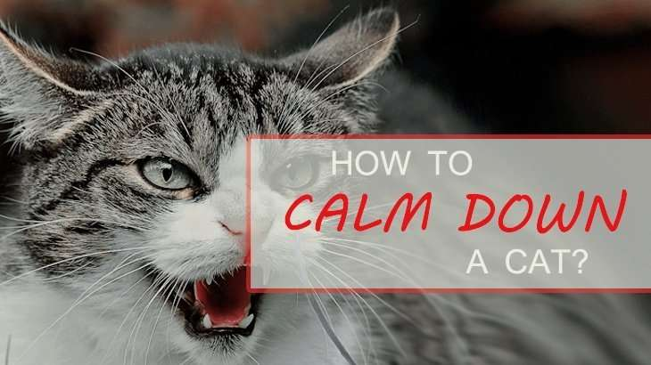 How To Calm Down A Cat