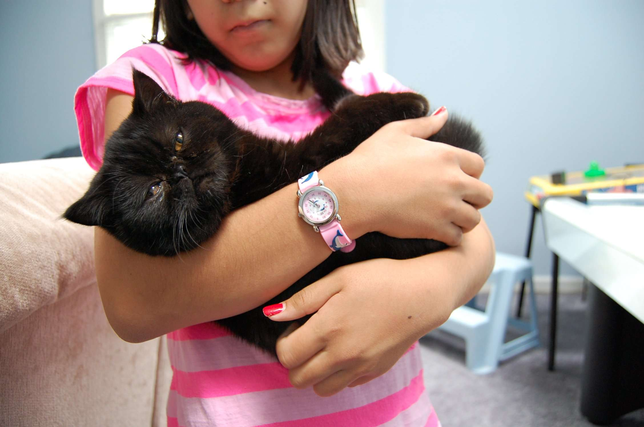 How to Care for Your Cat After Neutering or Spaying: 5 Steps