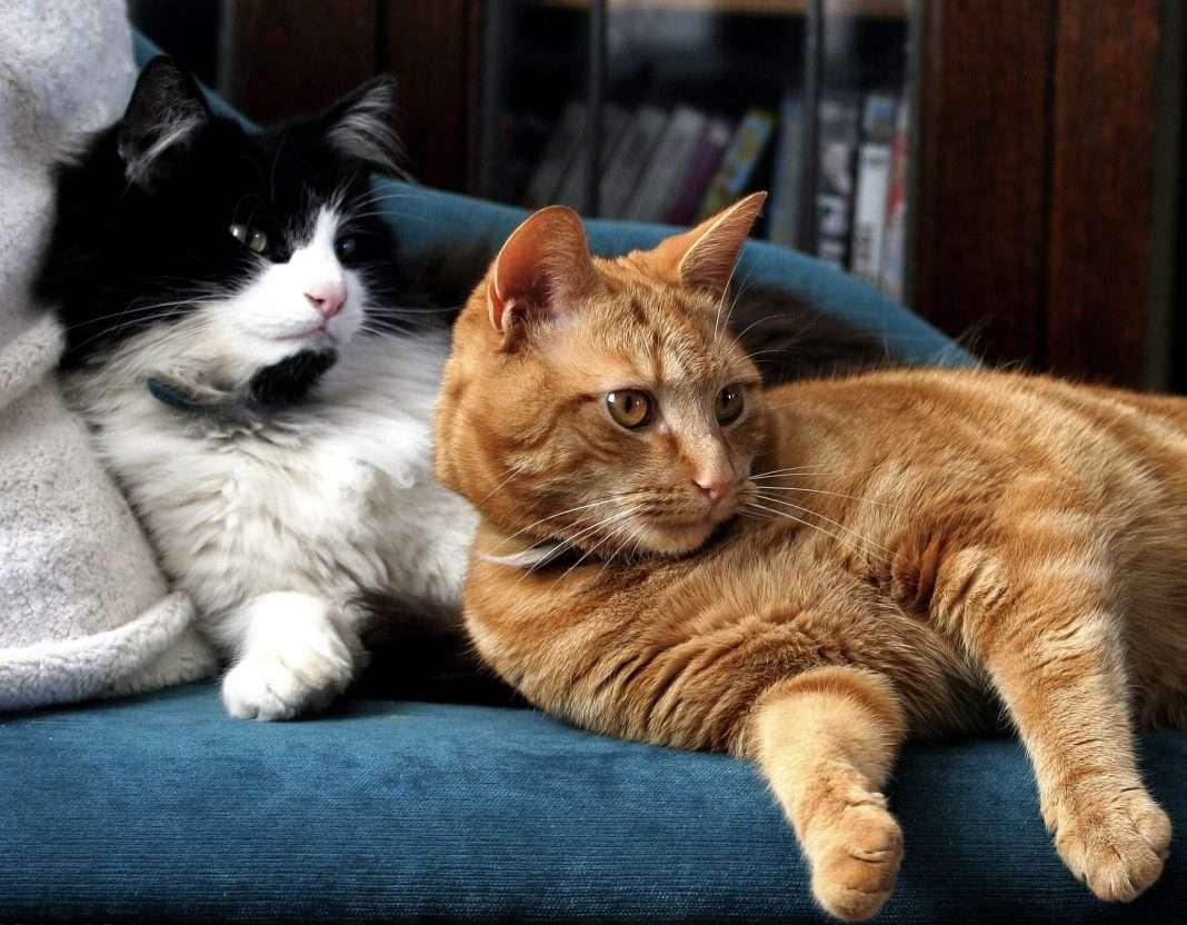 how to get cats to get alongsmart behaviorists share