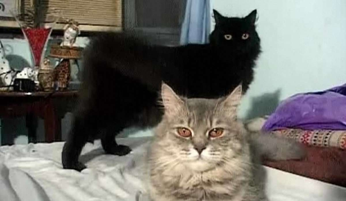 How to Get Two Cats to Get Along