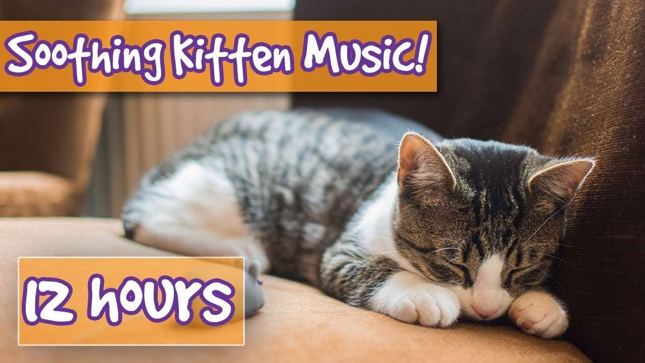 How to Make your Kitten Calm Down! Relaxing Music to Help ...