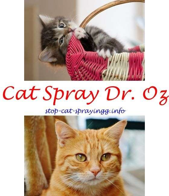 How to remove cat spray smell from couch.Female cat heat ...