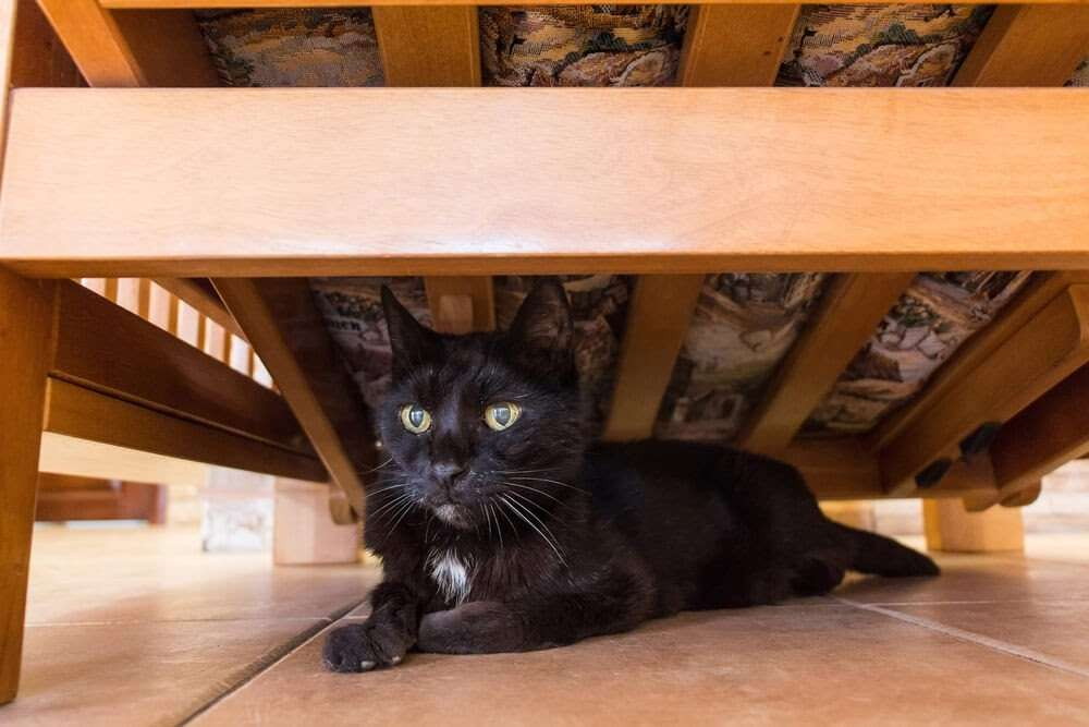 how to stop cat from hiding under the bed mishkanet com