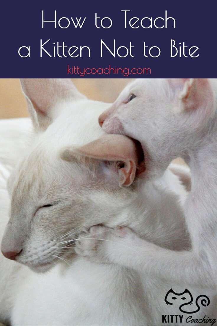 How To Teach A Kitten Not To Bite (2018)