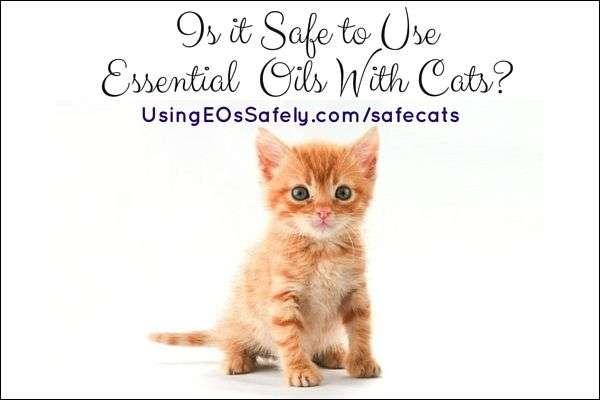 http://www.usingeossafely.com/safecats