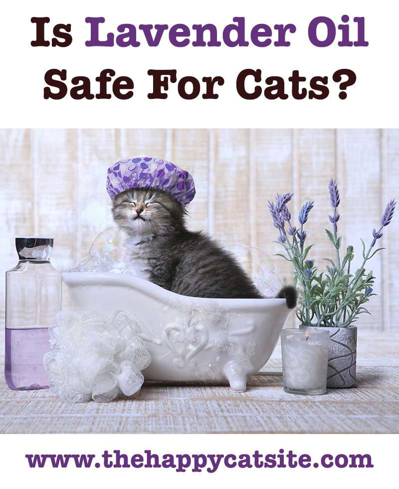 lavender essential oil for fleas on cats does it work