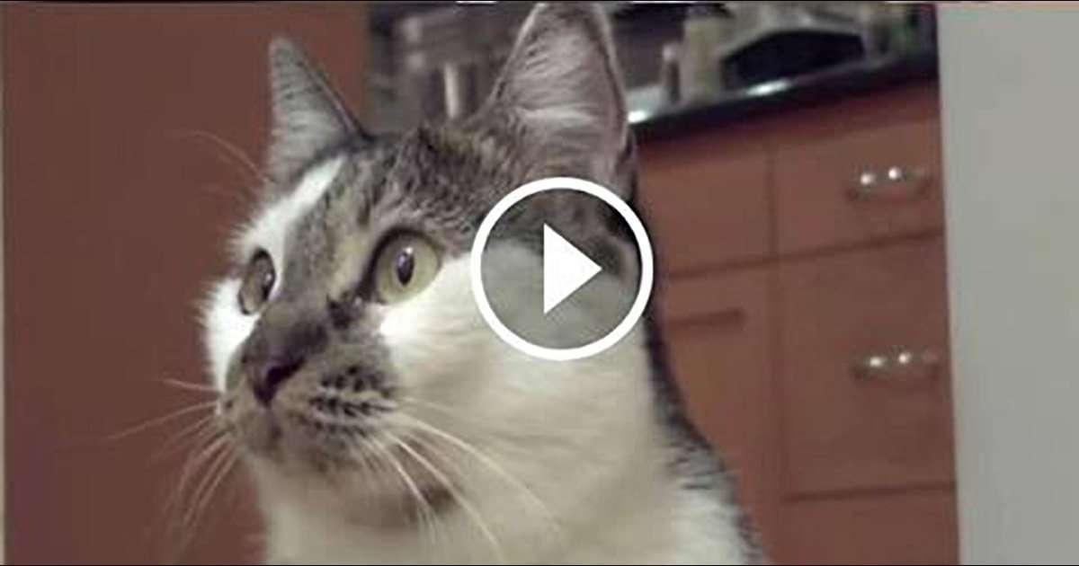 My Talking Cat Says âI Donât Knowâ?