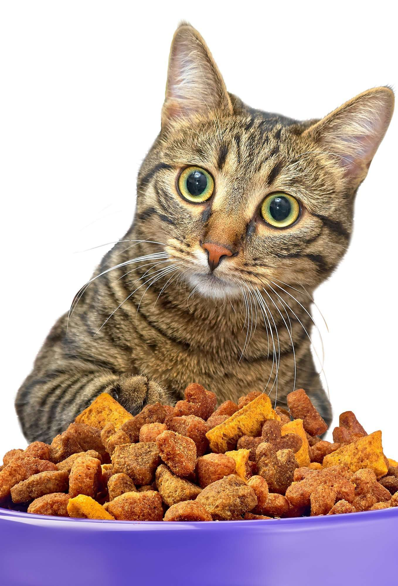 Myth Buster: Canned vs. Dry Food