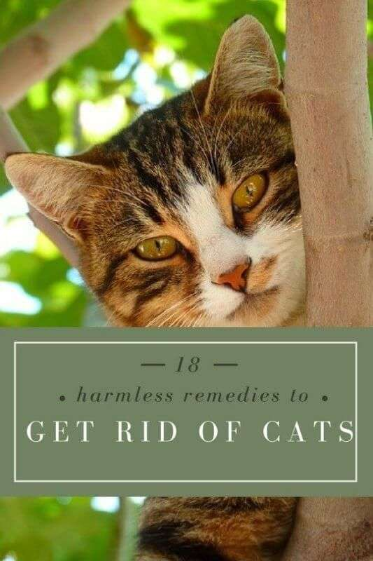 Remedies To Keep Cats Out Of Your Yard