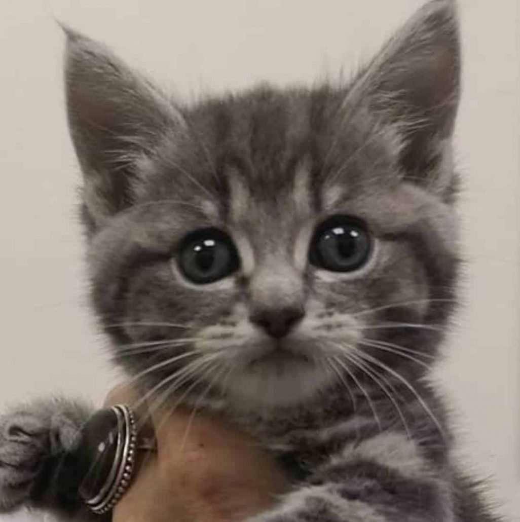 stray cat rescue team west midlands birmingham pet