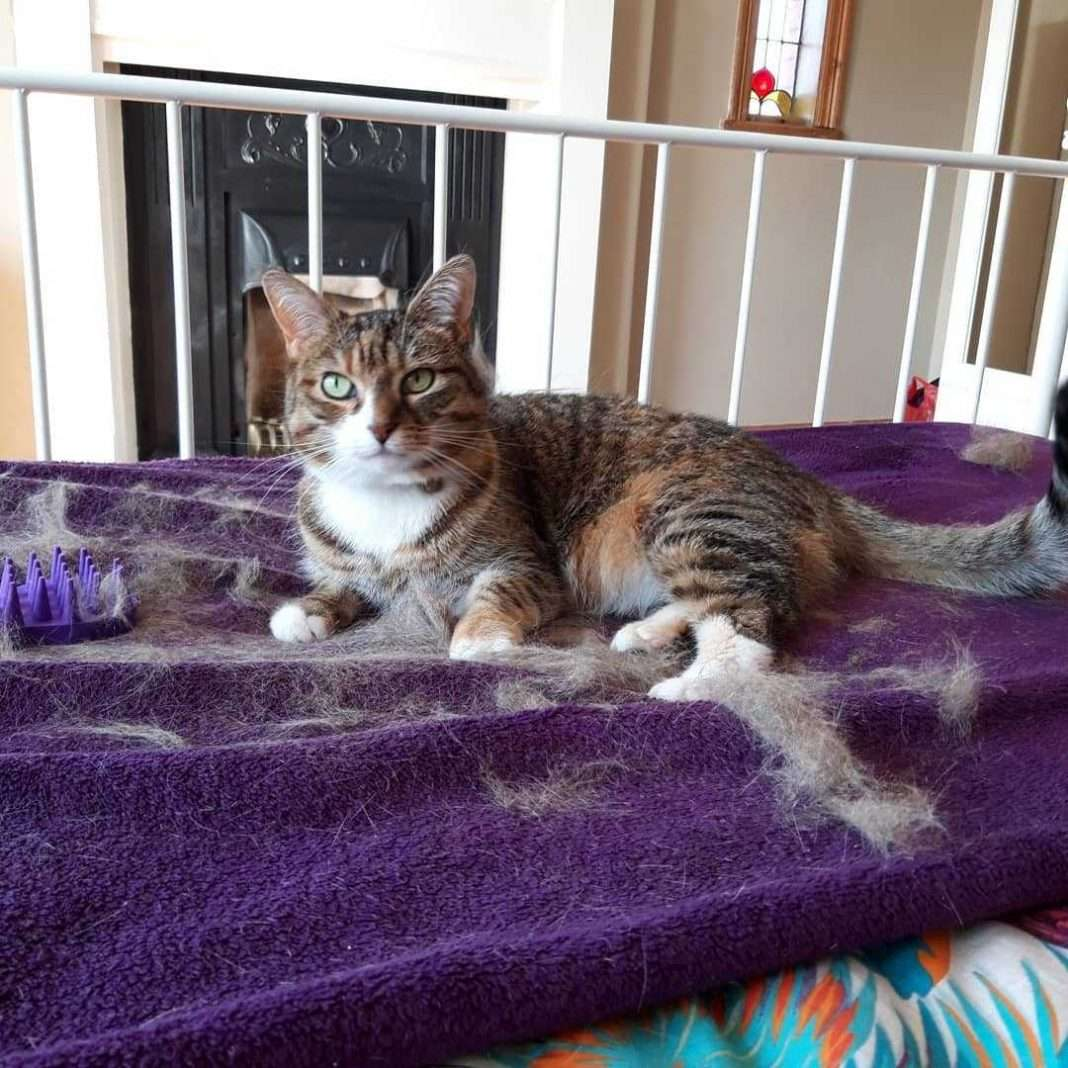 what are the causes of hair loss in cats and how to solve