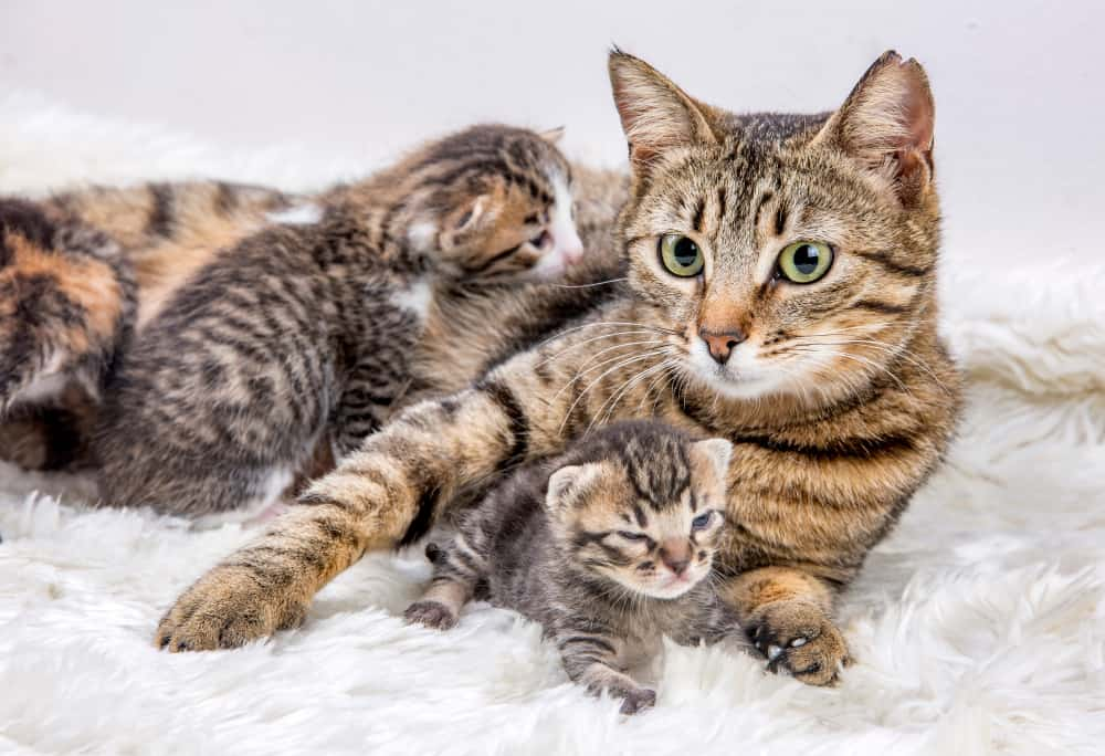 what does a mother cat do with a dead kitten