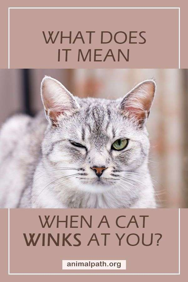 what does it mean when a cat winks at you cats cat