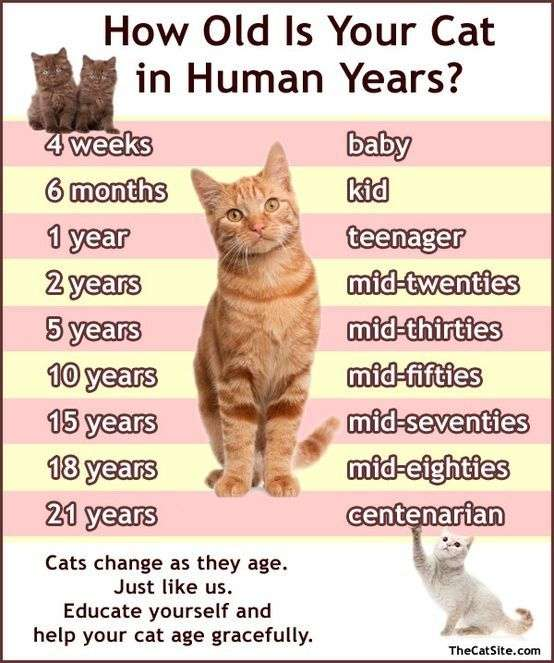When Does A Cat Stop Being A Kitten?