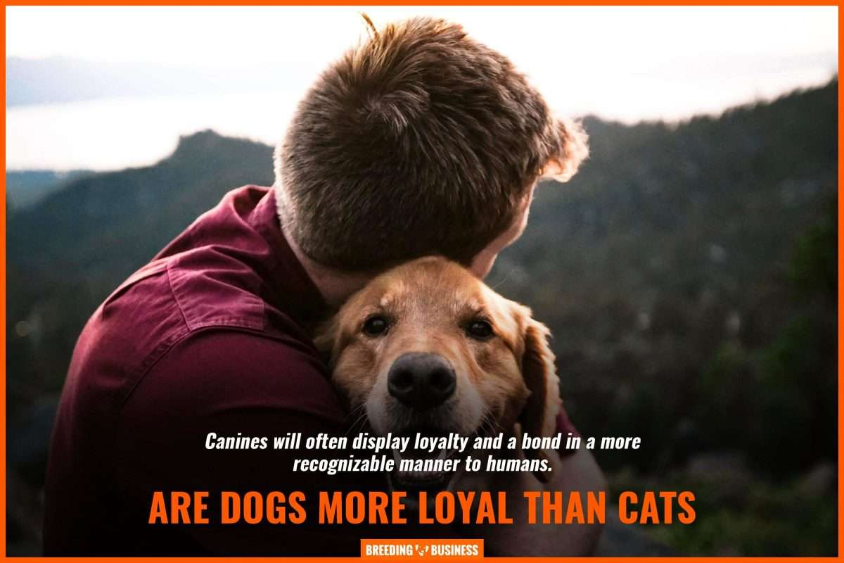 Why Are Dogs So Loyal  Top 8 Reasons Backed By Science &  FAQs