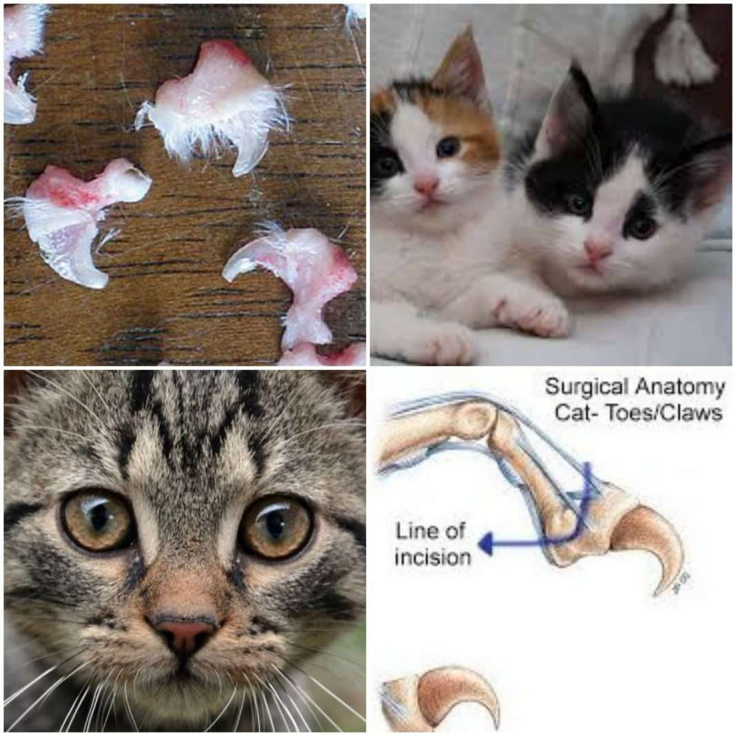 why declawing your cats is animal cruelty best pet supplies