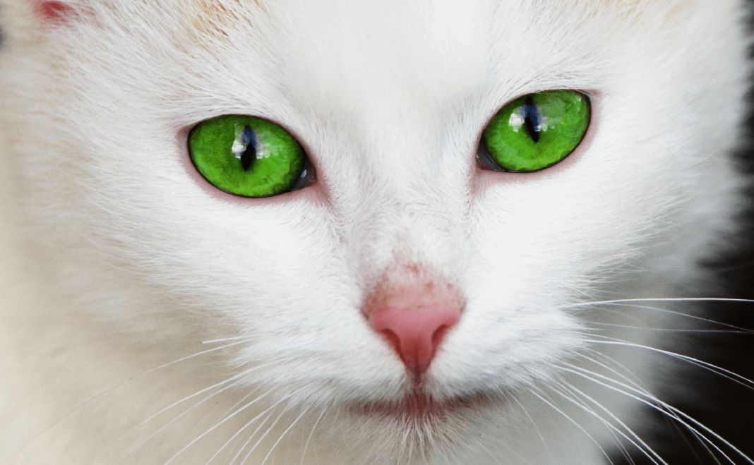 why do cats have slits in their eyes catwiki