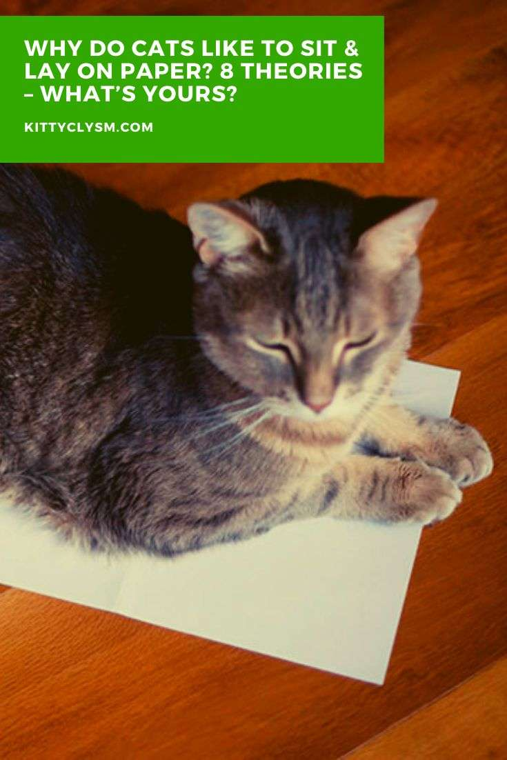Why Do Cats Like to Sit & Lay on Paper? 8 Theories