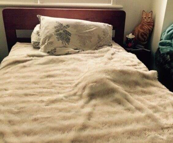 why do cats sleep under the covers quora