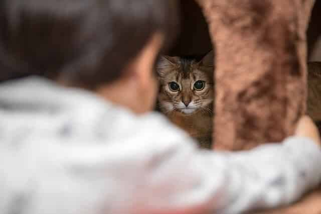 Why Does My Cat Sleep Under the Bed? (4 Reasons and ...