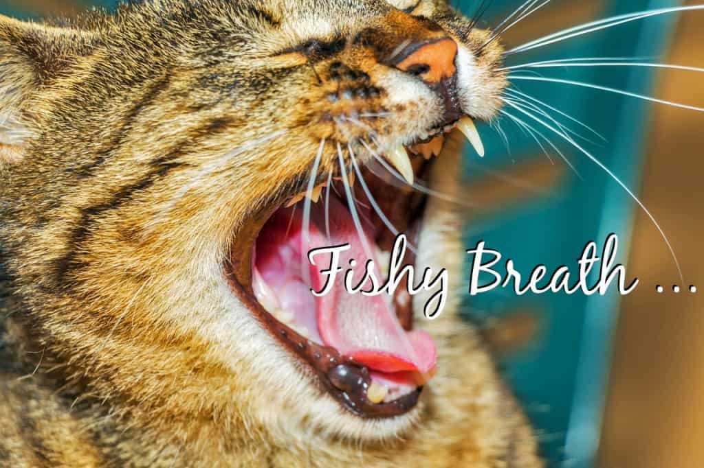 why does my cats breath smell like fish fluffy kitty