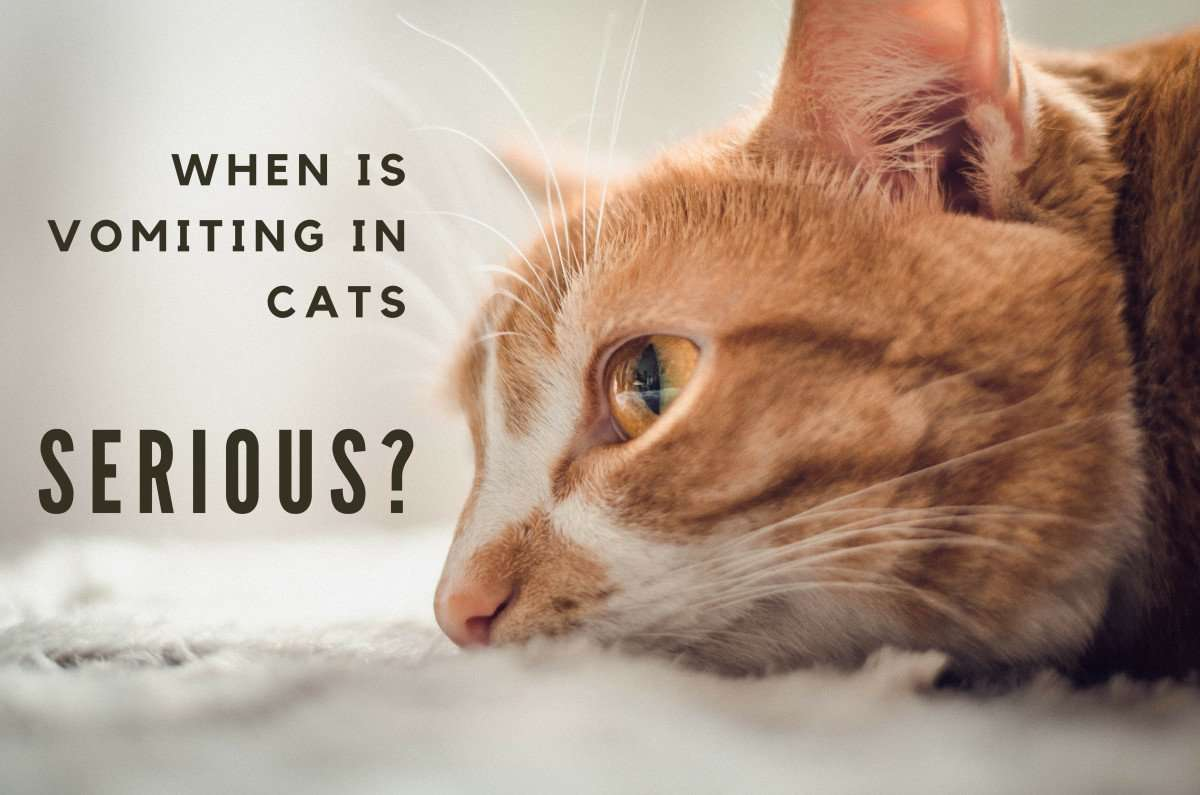 Why Is My Cat Vomiting and What Should I Do?
